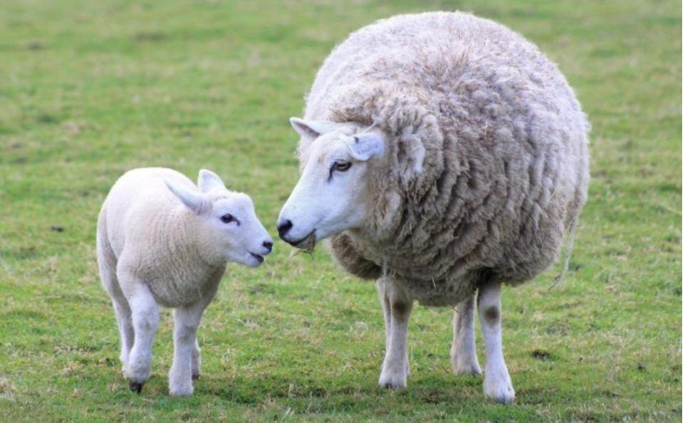 I dieci comandamenti per i membri della chiesa riguardo al loro pastore