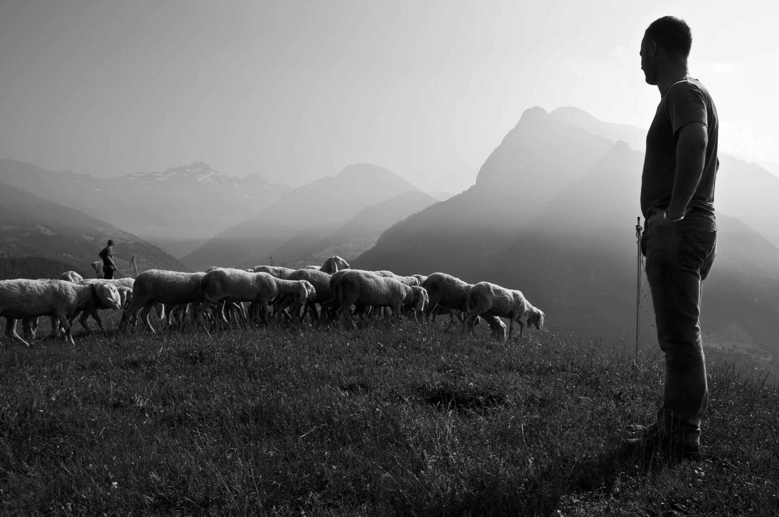 Teologia e pastorato biblico