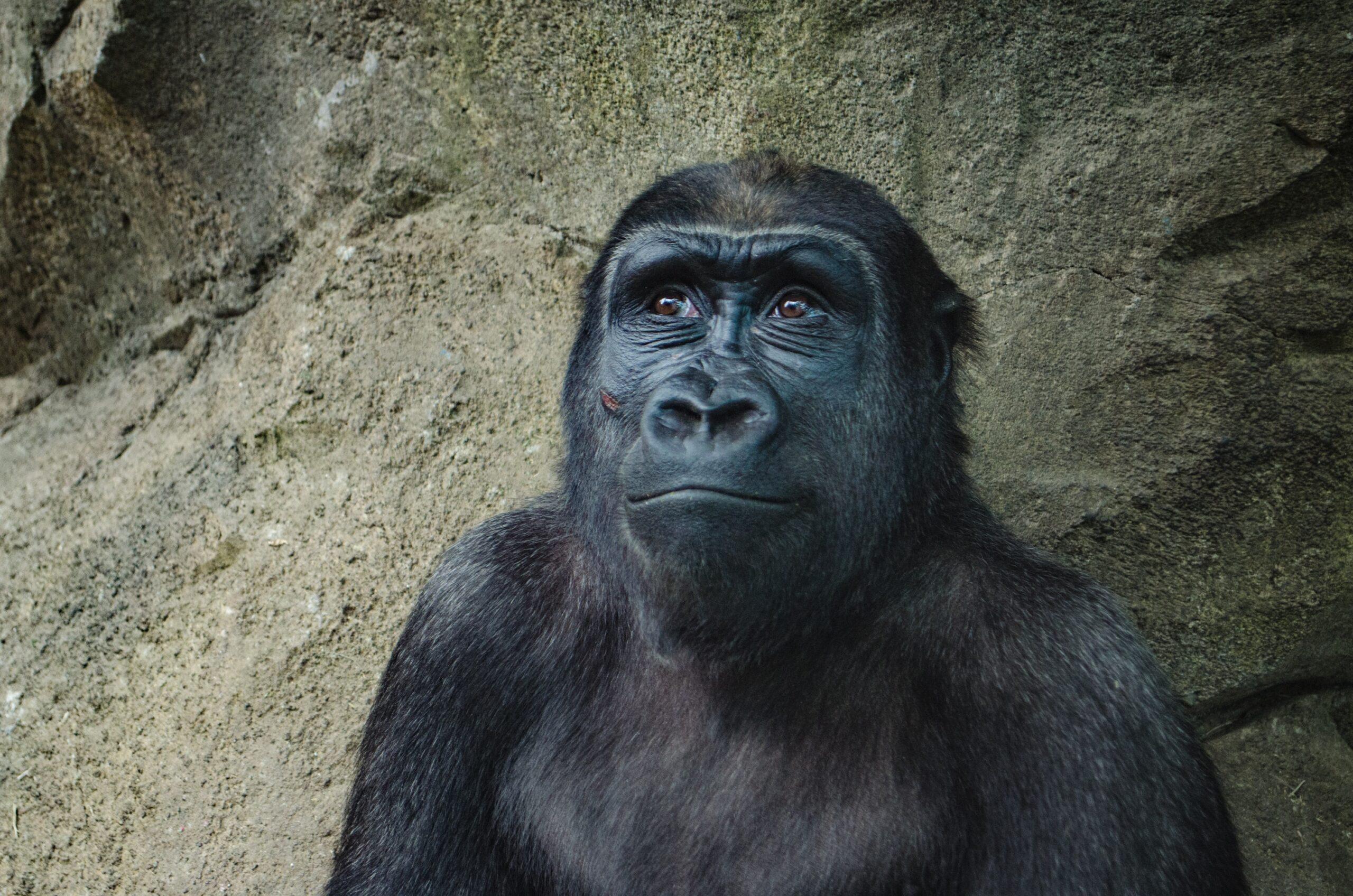 È stato dimostrato che l'evoluzione sia vera?